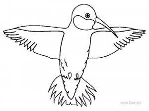 coloring pages of humming bird   Printable Hummingbird Coloring Pages For Kids   Cool2bKids