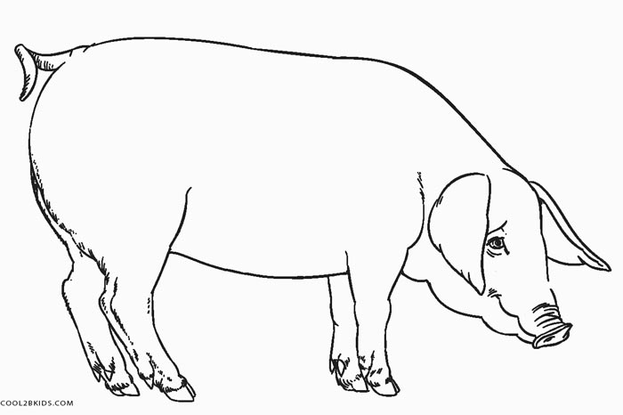 free pig coloring pages - photo#17