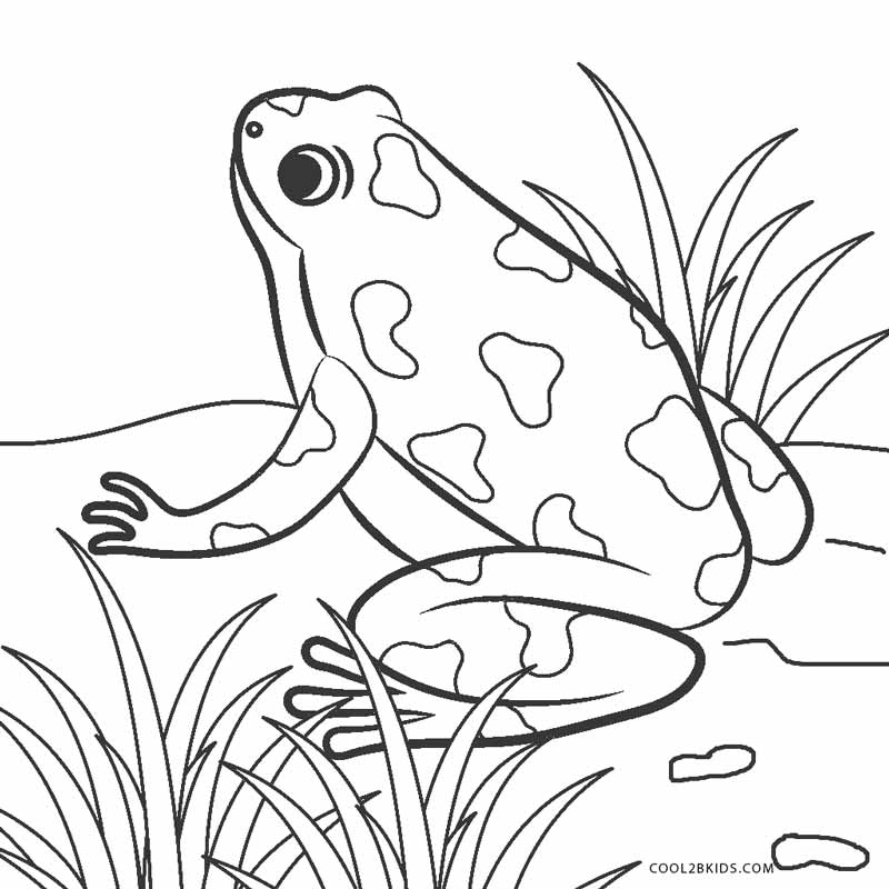 frog coloring pages free - photo#14